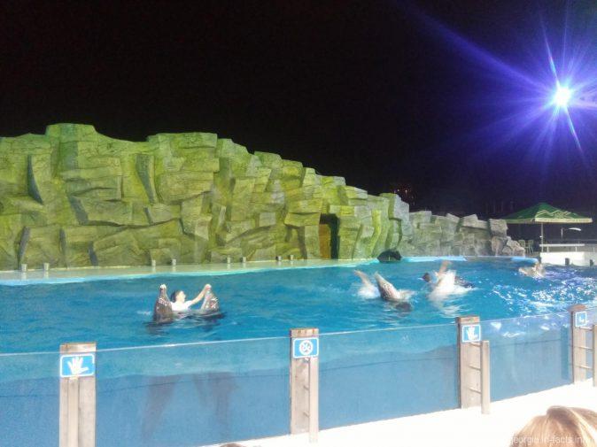 Часть представления в дельфинарии Батуми