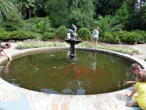 Фонтан с рыбками в ботаническом саду города Батуми