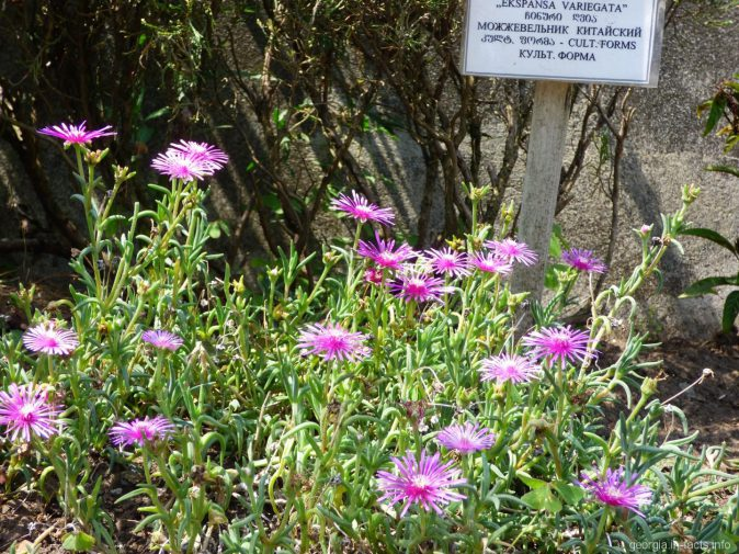 Клумбы в ботаническом саду Батуми