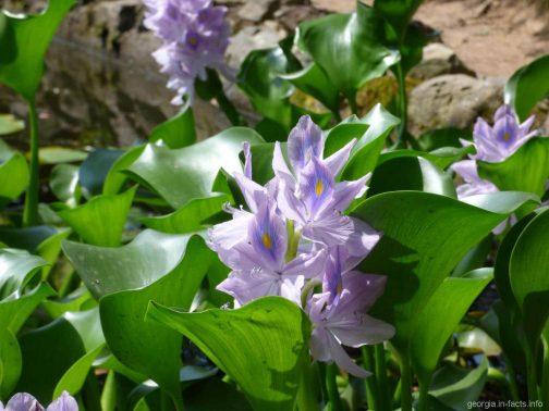 Красивые цветы в Батуми