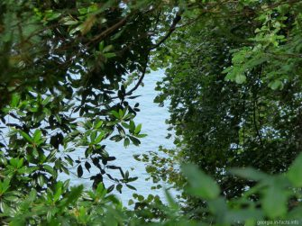 Кусочек моря в ботаническом саду Батуми