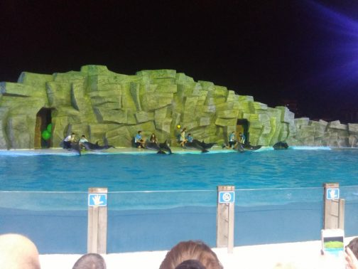 Ласки дельфинов в Батуми