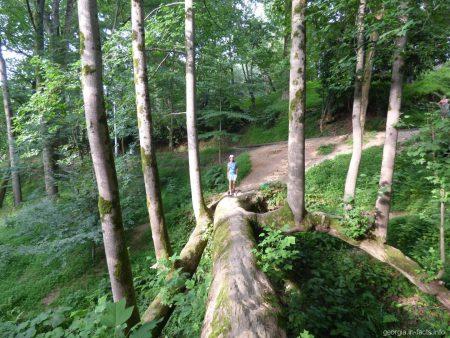 Мост из тюльпанного дерева в ботаническом саду Батуми