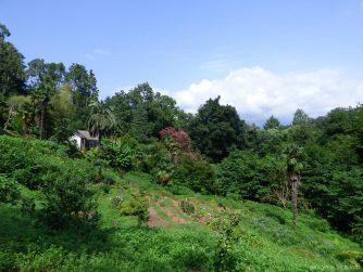 На склонах ботанического сада Батуми