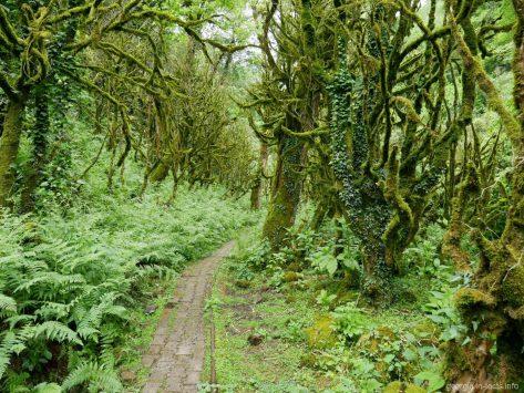 Необычный лес на экскурсии по Мачахеле, Грузия