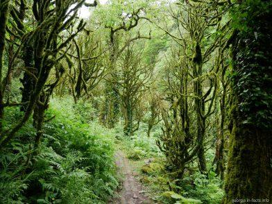 Причудливый лес по дороге к водопаду Мирвети, Грузия