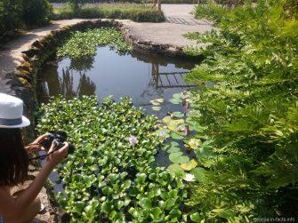 Пруд с лотосами в ботаническом саду Батуми