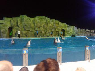 Танцы дельфинов в Батуми