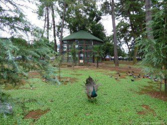 Территория птичника в Батуми