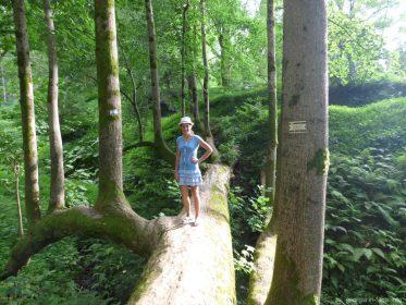 В Ботаническом саду Батуми
