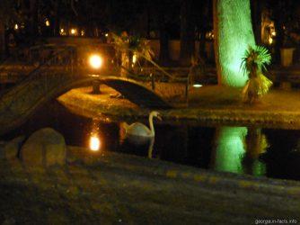 Вечернее посещение птичника в Батуми