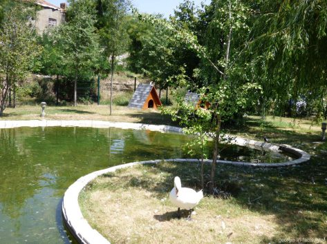 Зооуголок на территории Цминда Самеба в Тбилиси
