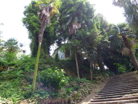 Дача Д'Альфонса в ботаническом саду Батуми