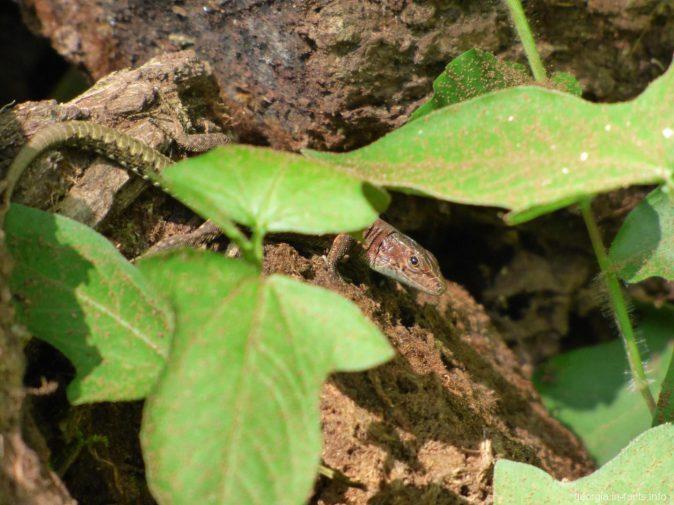Жизнь в ботаническом саду города Батуми