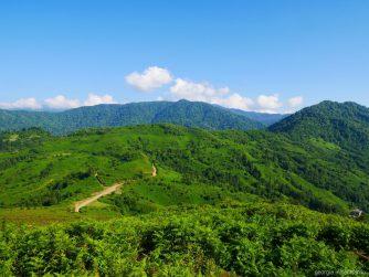 Чайные плантации на обзорной площадке, Аджария, Грузия