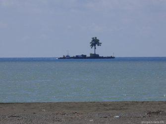 Баржа с живым деревом на Черном море, Грузия