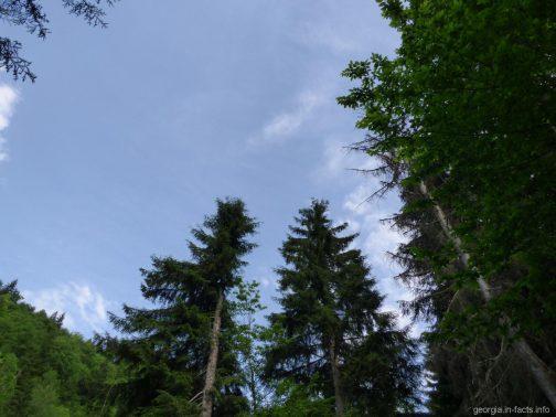 Боржомский парк, Грузия