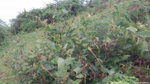 Остатки чайной плантации рядом с Батуми