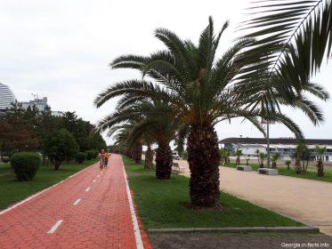 Пальмы и велодорожка в Батуми